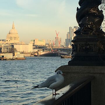 Seagull in front of St Pauls Cathedral by emimarie