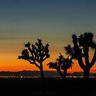 guardians of the desert by Karol Franks