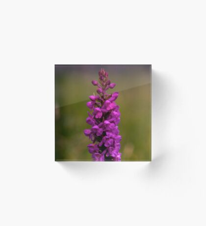 Fragrant Orchid, Dun Eochla, Inishmore Acrylic Block