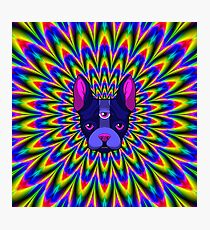 Space Terrier Tripper Photographic Print