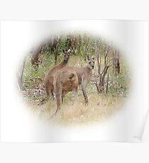 Kangaroos in the Park Poster
