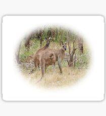 Kangaroos in the Park Sticker