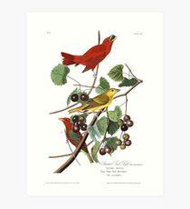 Summer Tanager - John James Audubon Art Print