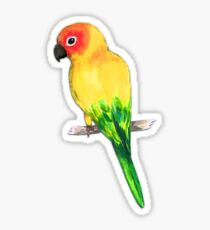 Sun conure Sticker