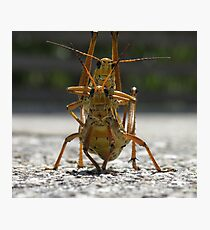 Hoppers Photographic Print