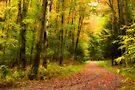 Autumn path by PhotosByHealy