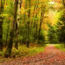 Autumn path by PhotosByHealy