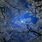 Moonlight Trees by Igor Zenin