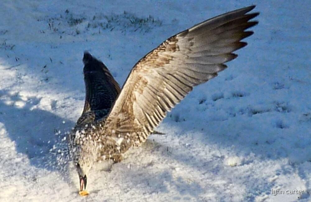 Young Gull...Lyme Dorset UK by lynn carter