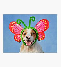 Cute Dog with Butterfly Ears Photographic Print