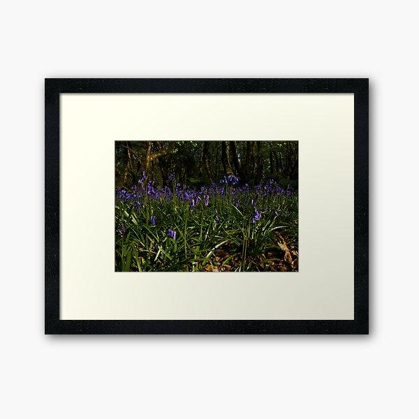 Bluebells in Prehen Woods Framed Art Print