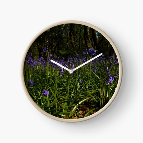 Bluebells in Prehen Woods Clock