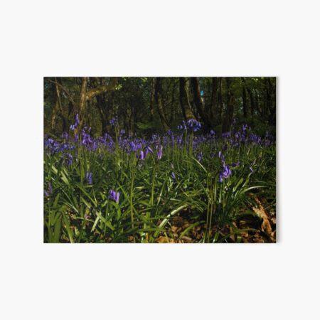 Bluebells in Prehen Woods Art Board Print