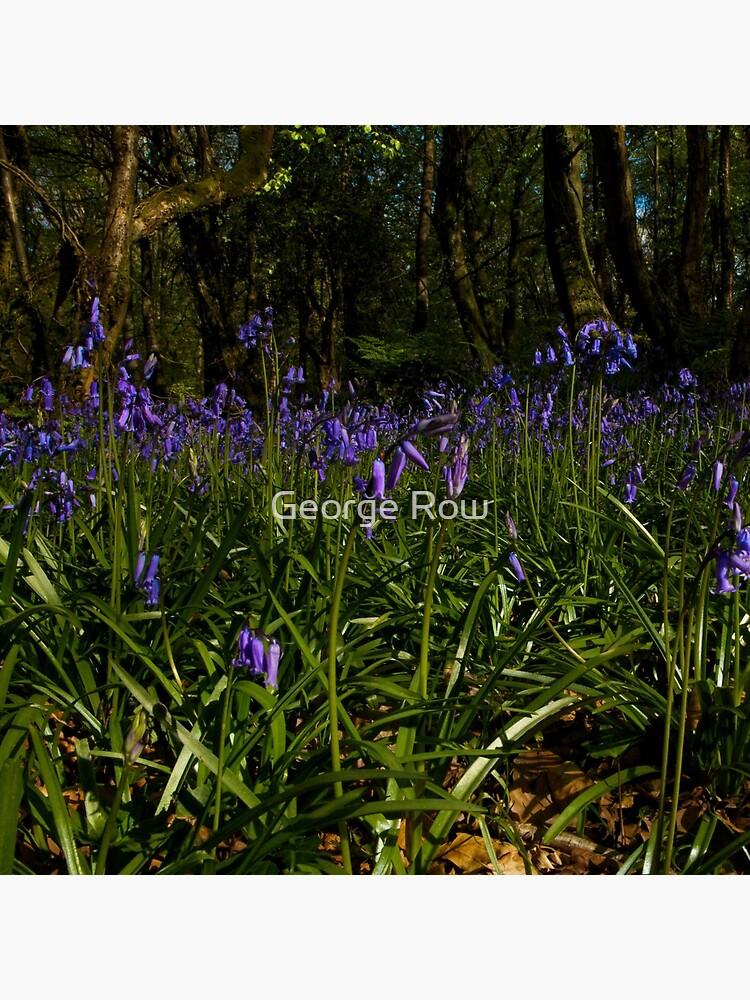 Bluebells in Prehen Woods by VeryIreland