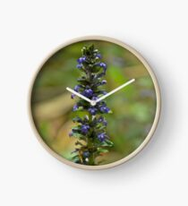 Bugleherb - Burntollet Woods Clock