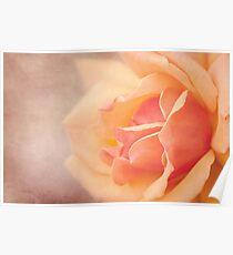 Soft Peach Poster