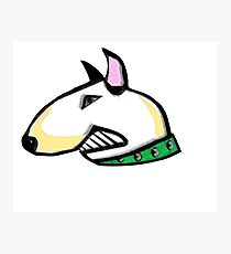 English Bull Terrier Head Photographic Print