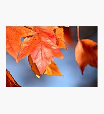 Nature's Pigment Photographic Print