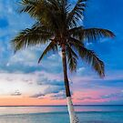 Cancun Palm at Sunset by Randy  LeMoine