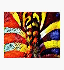 A Tail of Yarn Photographic Print