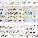 Guide to Horse Colors and Patterns by Joumana Medlej