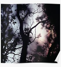 Tree branches on summer evening  in Spain square medium format film analogue photographer Poster