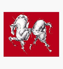 Red Horse Photographic Print