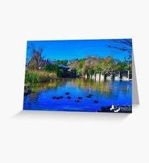 Duck Pond at Alligator Adventure Greeting Card