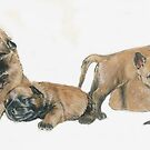 Malinois Puppies by BarbBarcikKeith