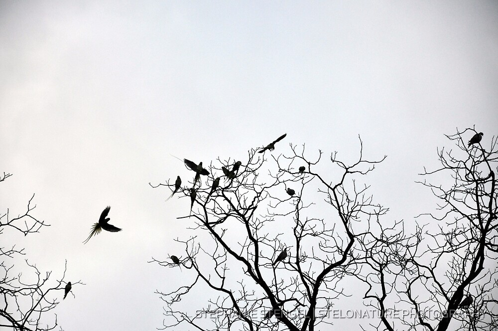 The Parrot Tree by STEPHANIE STENGEL | STELONATURE PHOTOGRAPHY