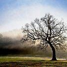 A Morning Walk by LarryB007