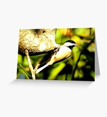 Carolina Chickadee Greeting Card