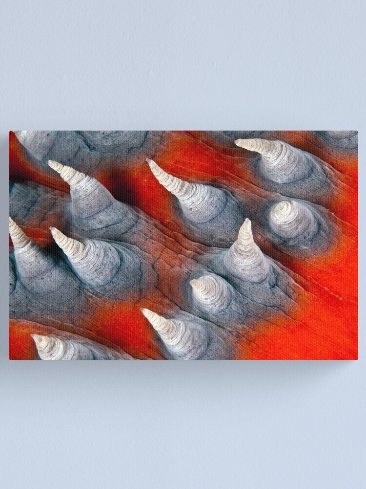 Alternate view of Teat? Fish? Canvas Print