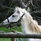 pretty pony by lilli robertson