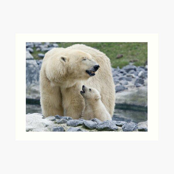 Polar love Art Print