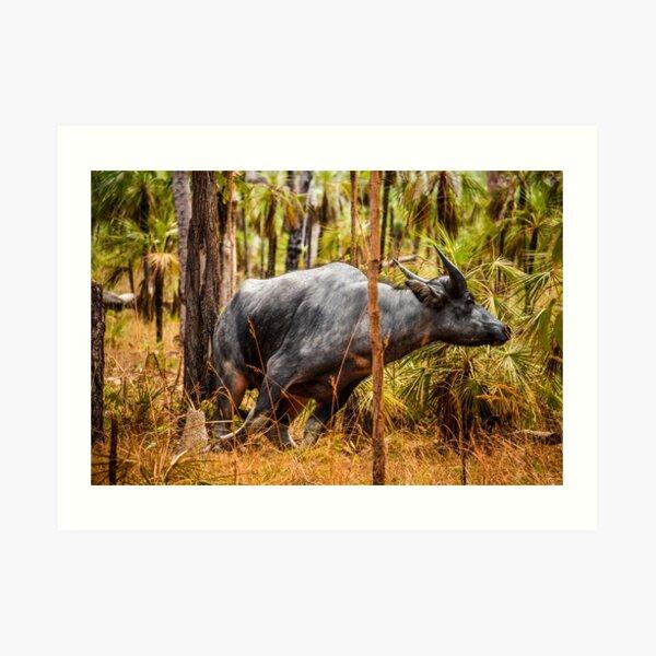Wild buffalo on the run Art Print
