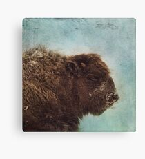 Wood Buffalo Canvas Print