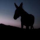 Baby Burro from a Formerly Wild Herd by Corri Gryting Gutzman