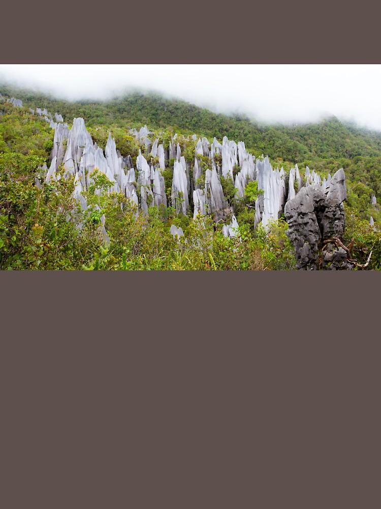 Limestone pinnacles at gunung mulu national park by Juhku