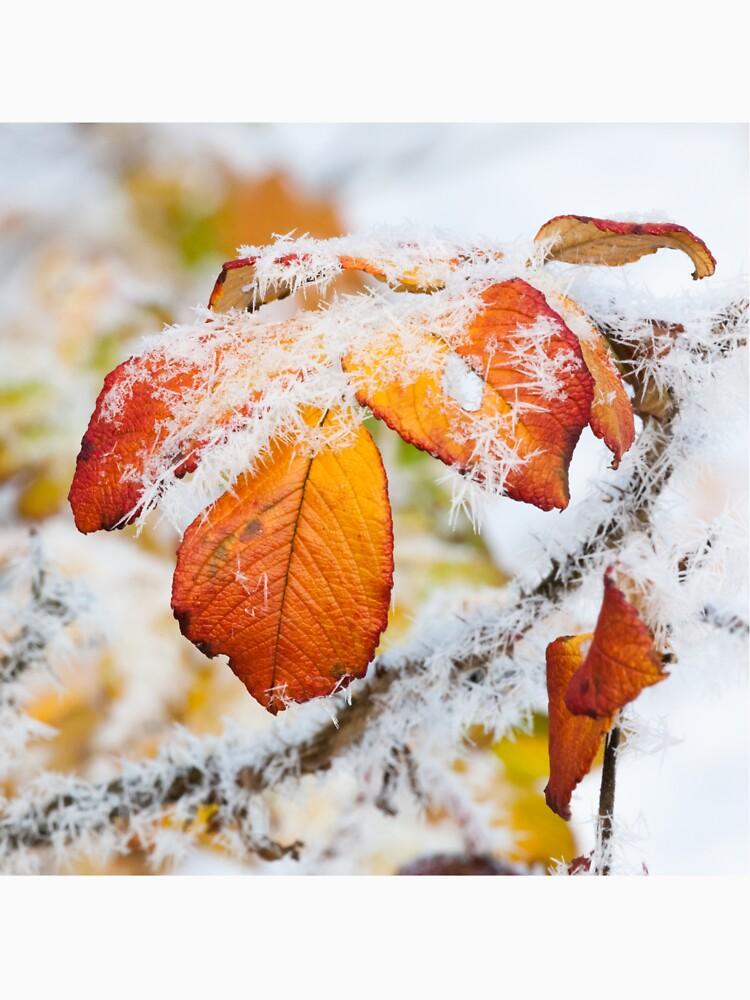 Rose bush frozen autumn color leaves by Juhku