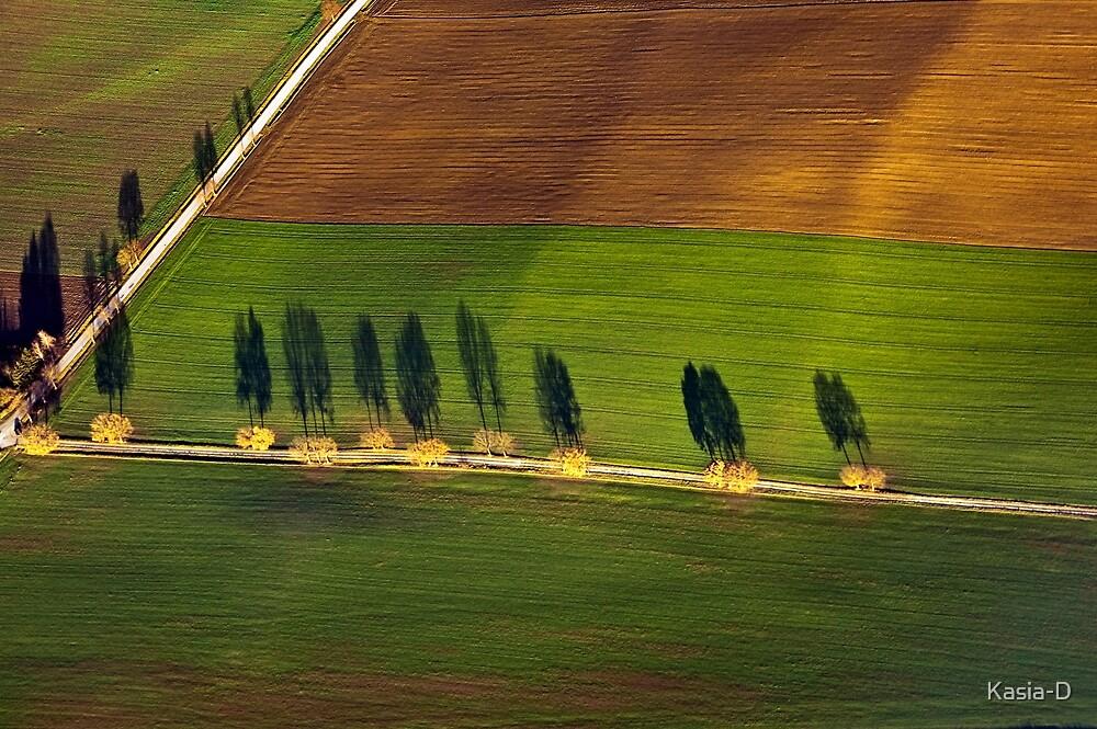 Autumn Shadows, Bavaria by Kasia-D