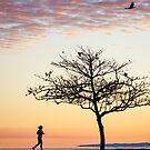 Scenes of Bramble Bay by Silken Photography