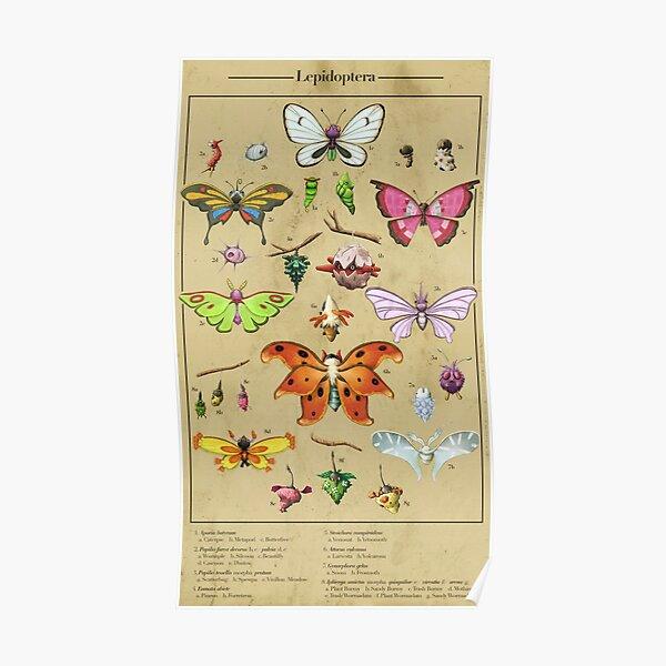 Lépidoptères de poche Poster