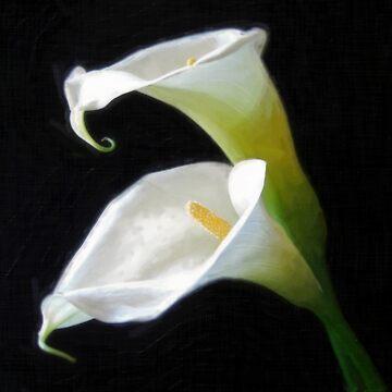 Elegant Calla Lily Flowers 8 Painterly by TravelPhotoArt