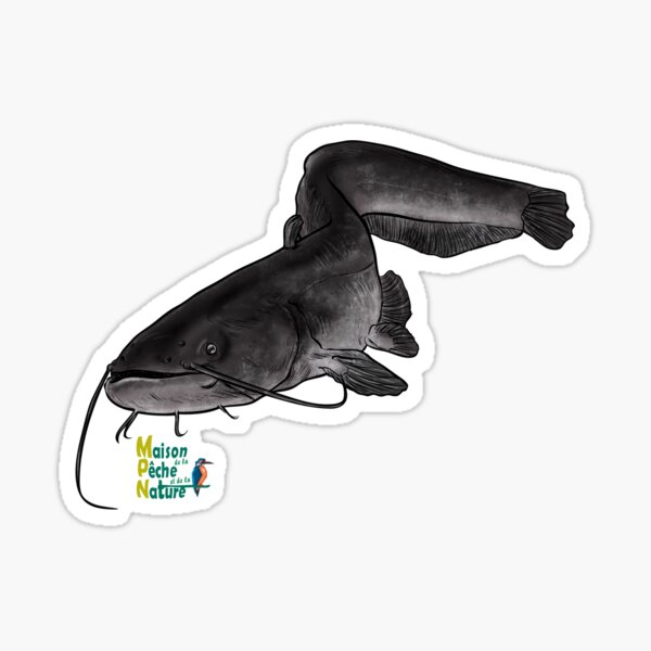 Silure wels cathfish Sticker