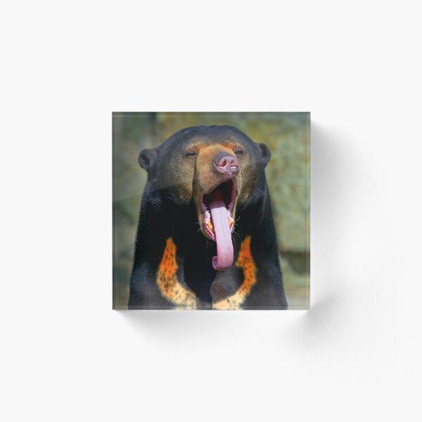 Sun Bear Acrylic Block