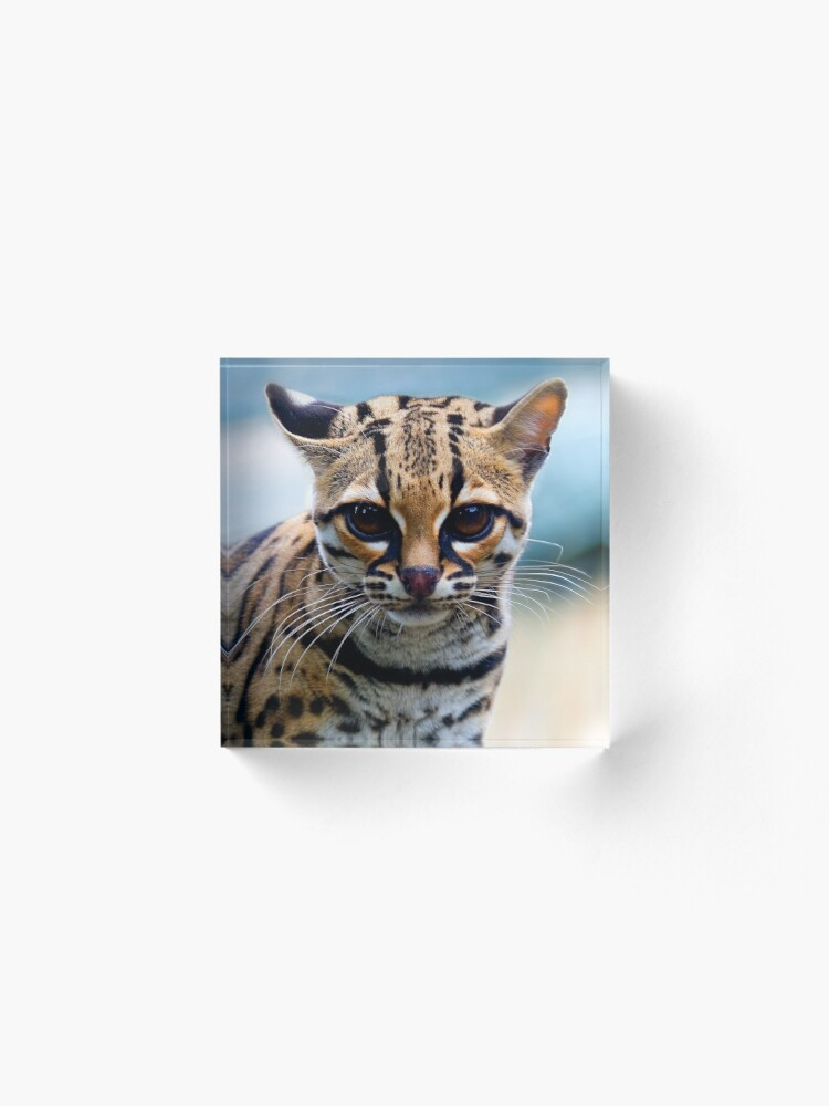 Alternate view of Margay Acrylic Block