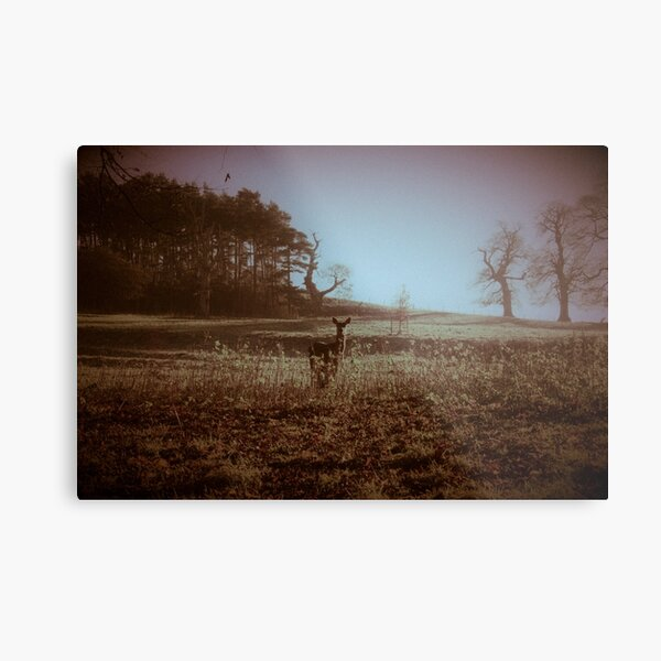 After The Cold Of The Silver Night Metal Print