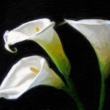 Elegant Calla Lily Flowers 7 Painterly by TravelPhotoArt