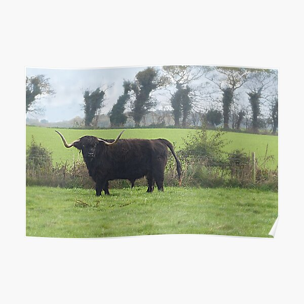 Public footpath? That's a lot of bull. Poster